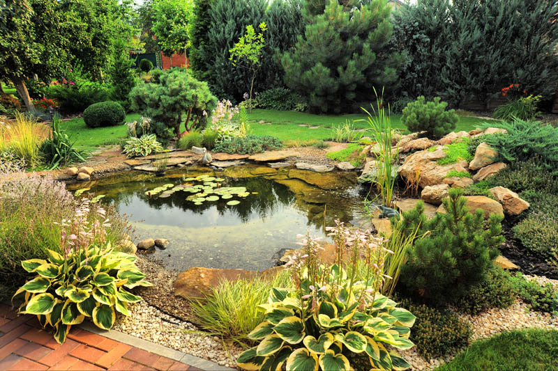 Things to Consider When Building a Pond
