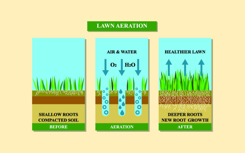 What is Lawn Aeration?
