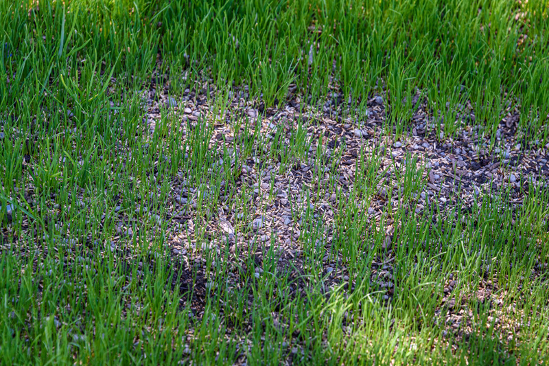 What is Overseeding?