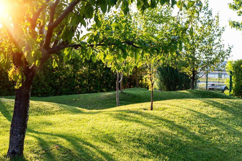 Landscape Berm
